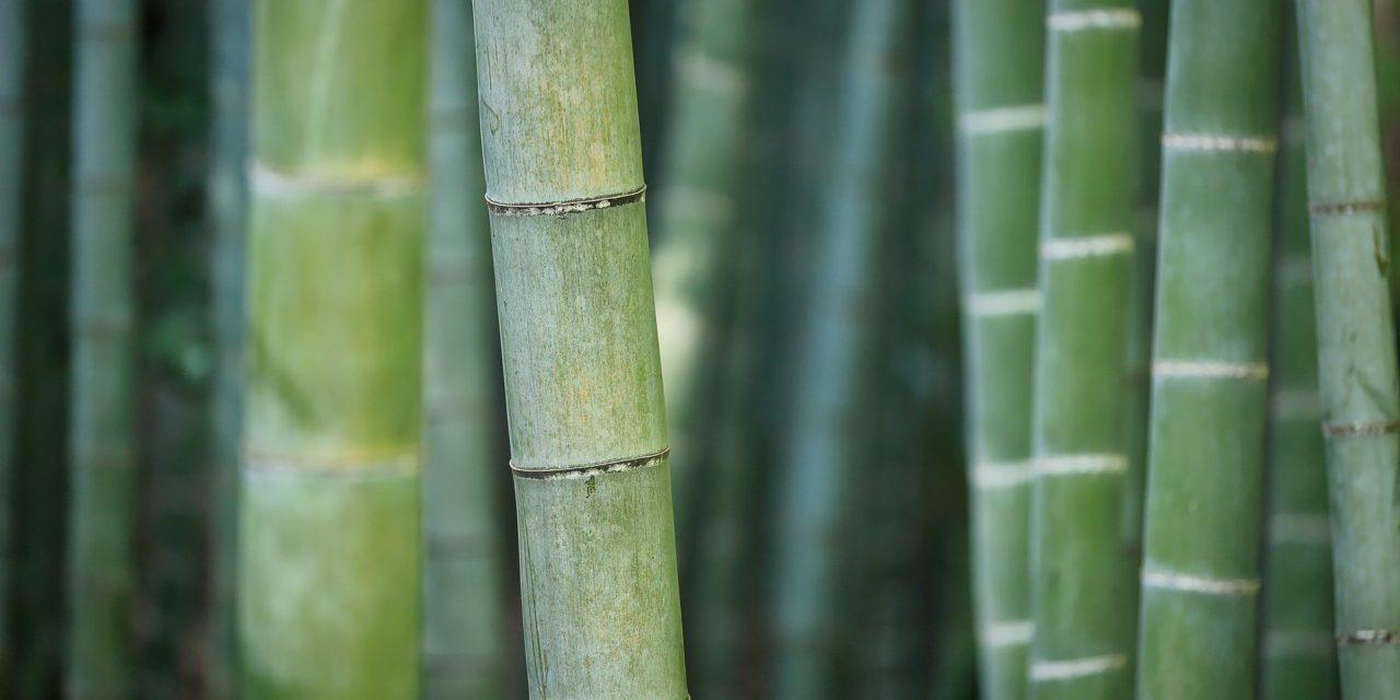 Bambus, czy na pewno dobry?