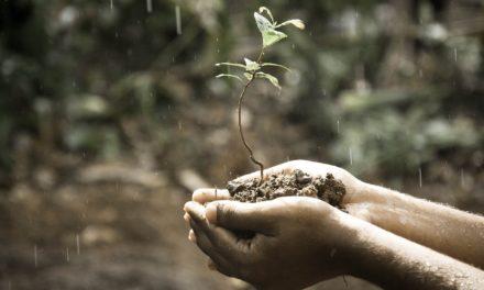 Czy wiesz, które rośliny wytwarzają najwięcej tlenu?