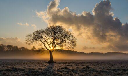 Jak na nas wpływa energia z drzew?