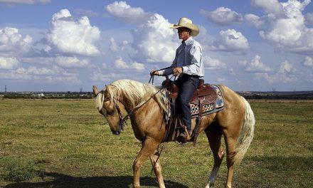 Dlaczego warto wybrać jazdę konną?