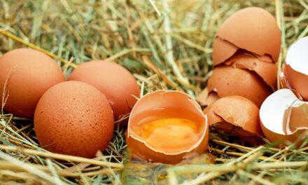 Prawdziwa cena jajek, czyli kulisy przemysłu drobiarskiego.
