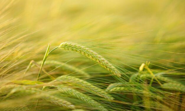 Uprawy ekologiczne, czyli jak luki w prawie zatruwają środowisko