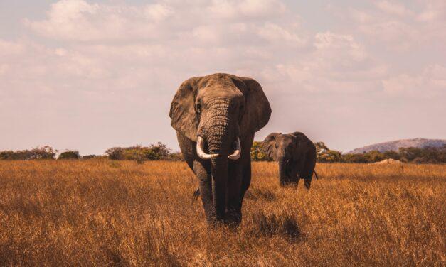 Poznaj najbardziej inteligentne zwierzęta świata